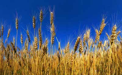India's agri exports fastest growing in the world: USDA