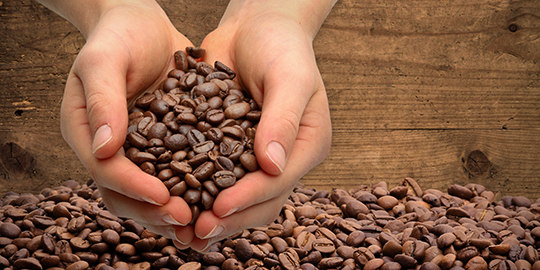 India's coffee exports up 13% till August