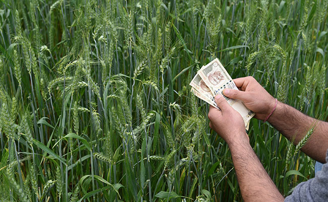 Foreign investment in agriculture sector reaches $1763.57 million