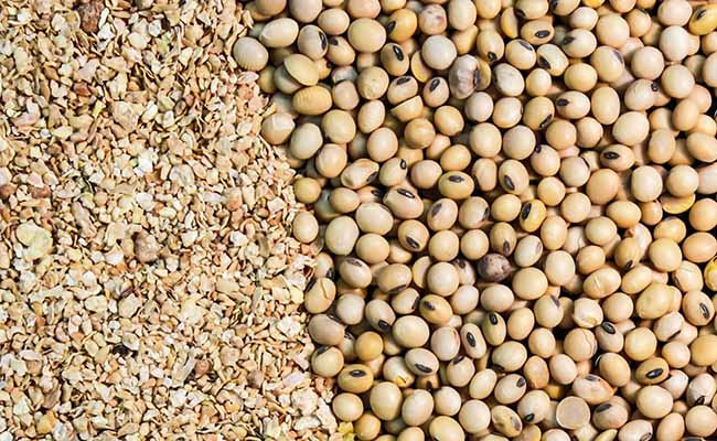 Soymeal exports hit historic low; down 91% in Jan