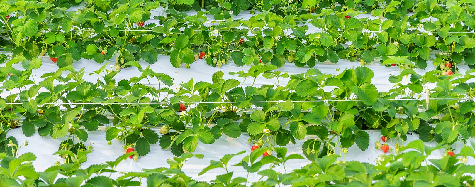 Plasticulture can lift agro output to Rs.68,000 cr