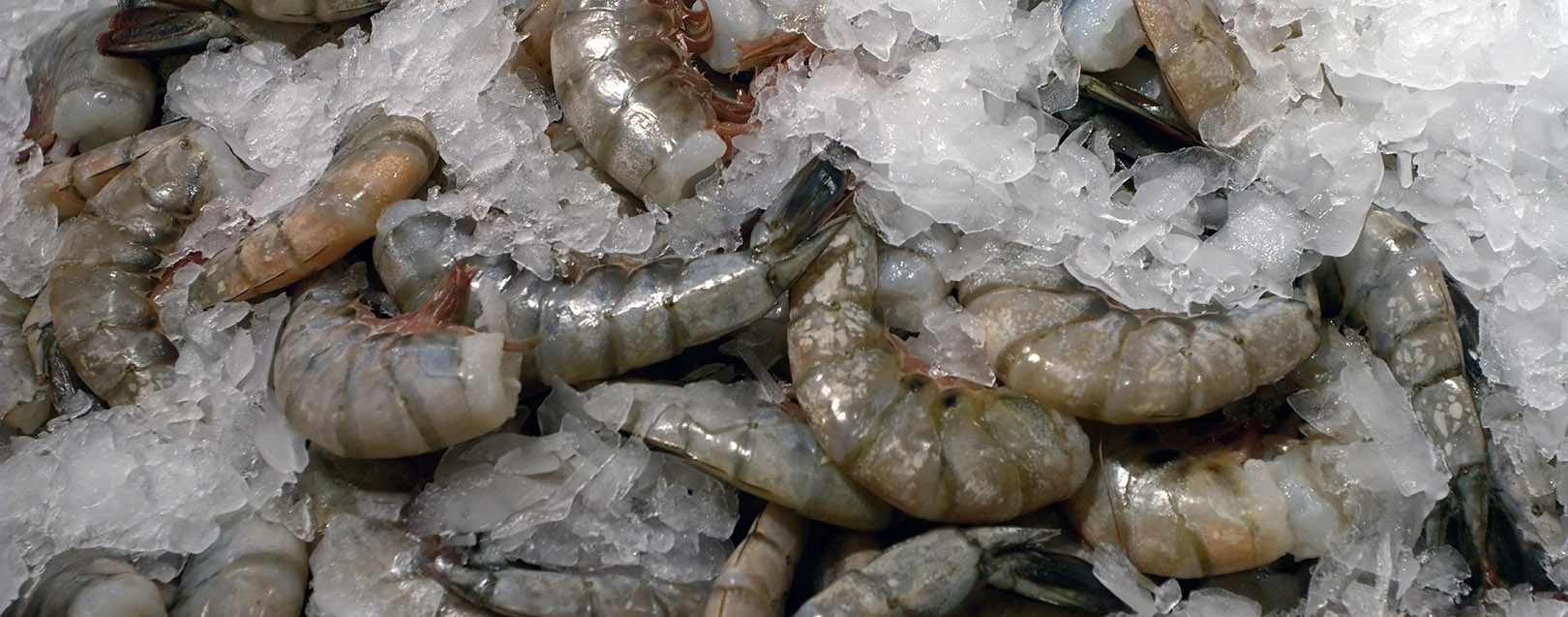 US cutting duty on shrimp imports to benefit Indian farmers: ICRA
