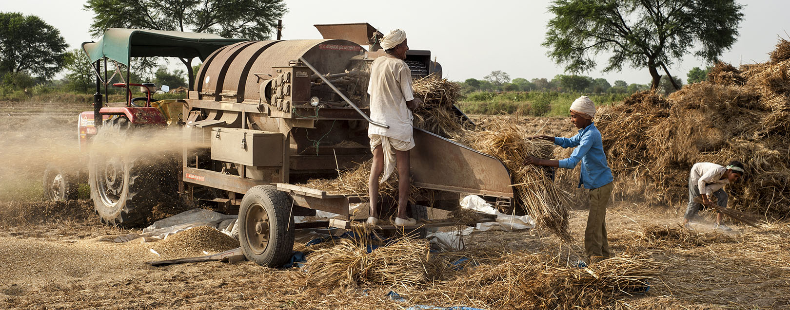 Govt hikes wheat MSP by Rs. 100/qtl; pulses by up to Rs. 550/qtl