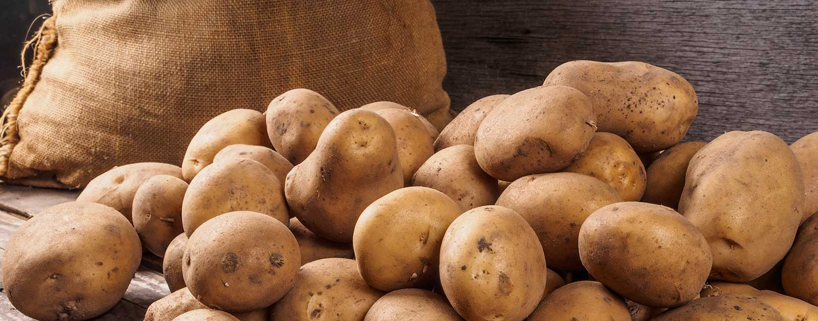 Potato production in India to be at 47 MT this year