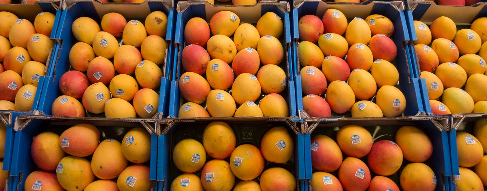 India may export mangoes to Australia after meeting their biosecurity standards