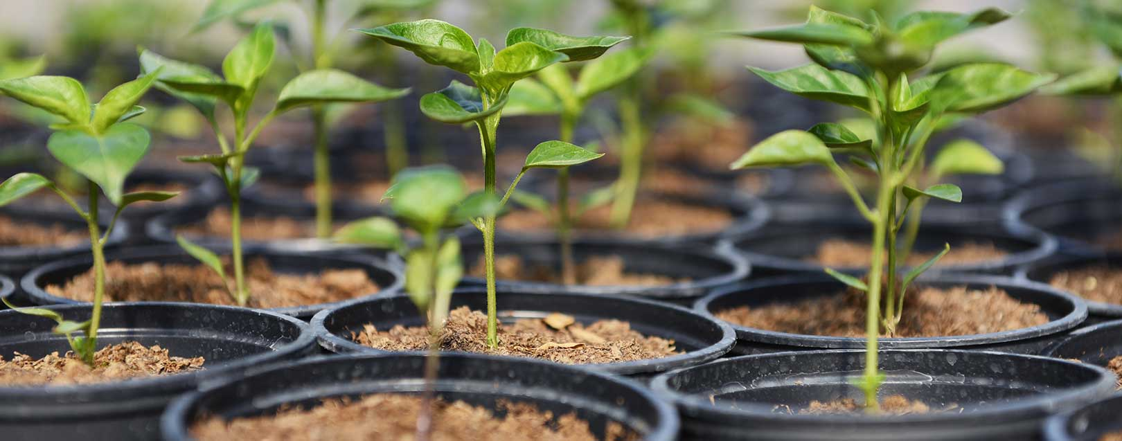 Govt revises inspection fee on plant material imports