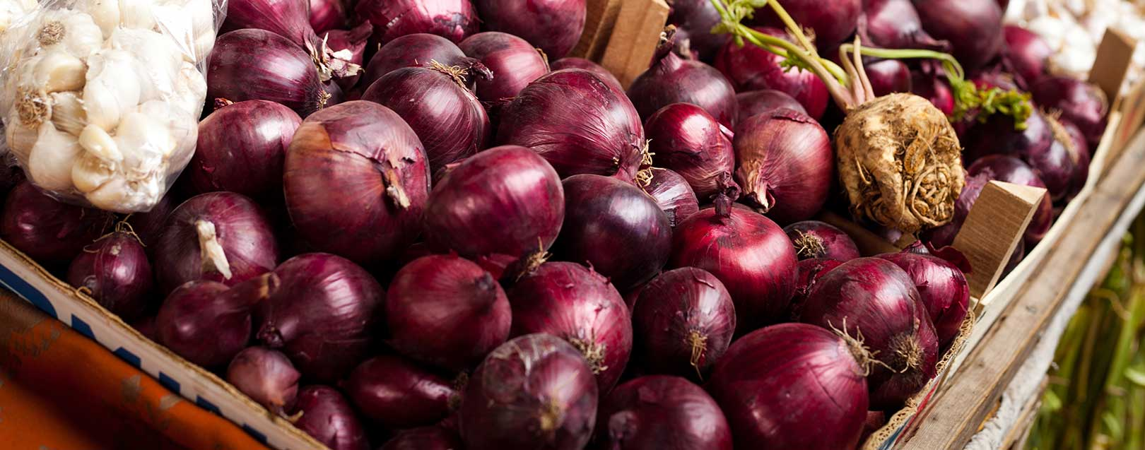 Centre to procure 2 lakh tonne onions from MP