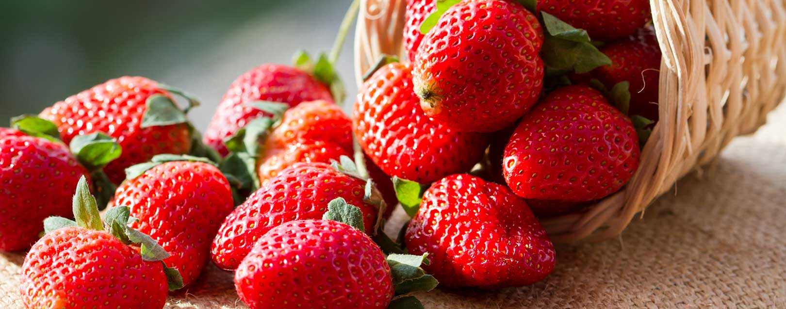 Saudi Arabia bans Egyptian strawberries due to pesticide residues