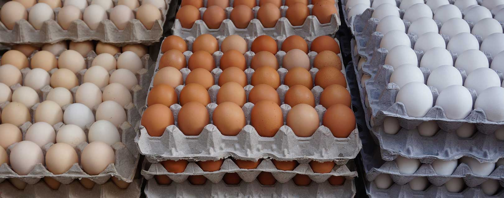 Livestock farmers urge Govt to take measures to resume egg exports to Qatar