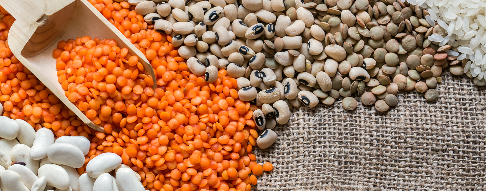 Govt lifts ban on export of all varieties of pulses